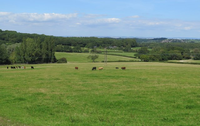 Fields adjacent to Robin Hill Country Park, Isle of Wight