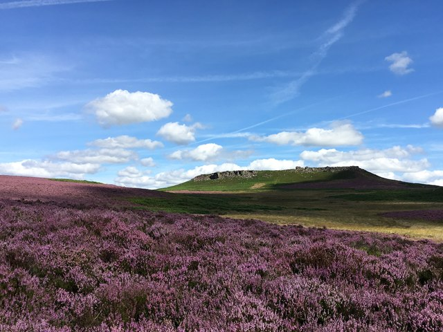 Heather on Hathersage Moor