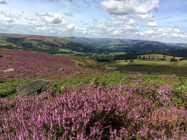 Heather, Hathersage and the Hope Valley