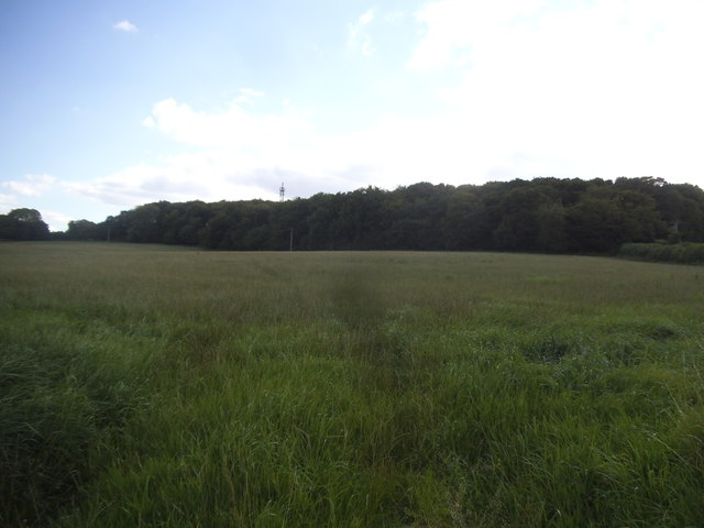 Field by Speen Road, Hughenden Valley