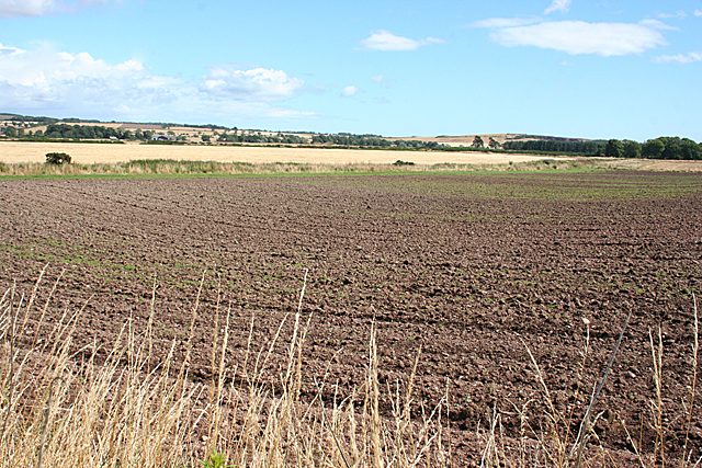 Fields near East Border