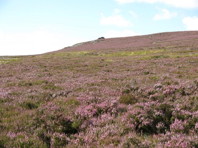 Moorland below Clevison Currick