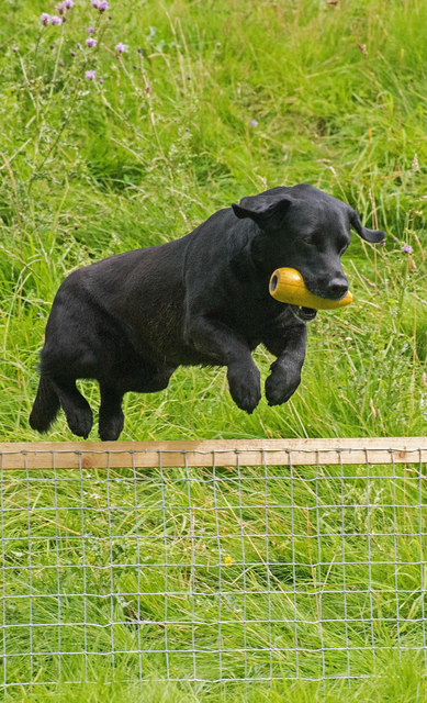 The Lowther Show - 12 August 2017 (21)