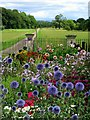 SE2970 : Cottage garden, Studley Lodge : Week 33