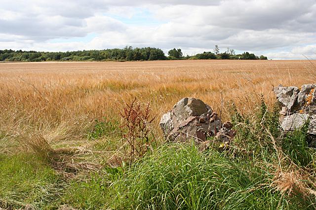 Field near Boghead