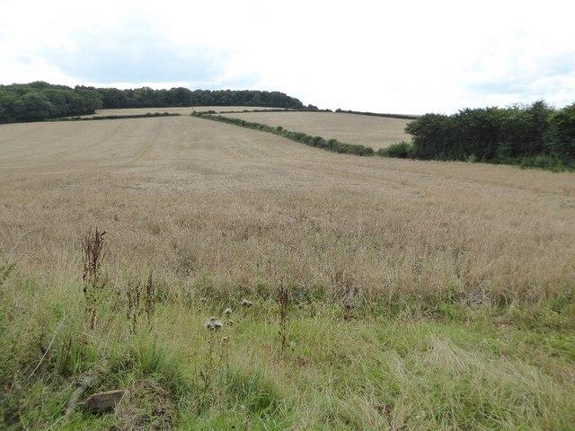 Farmland near Madgetts Farm