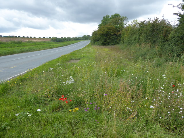 Wild flowers alongside Town End