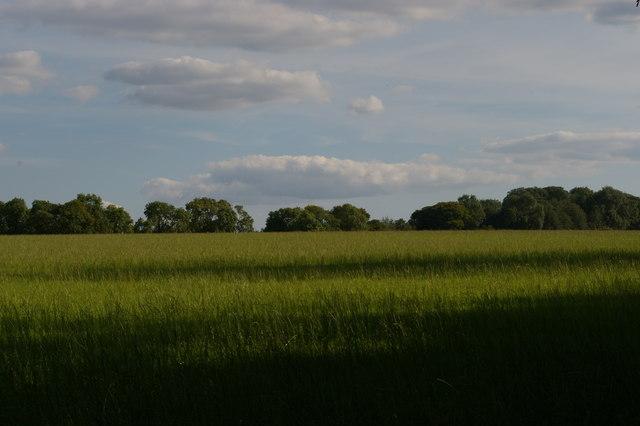 Field south of Cuckoo Wood