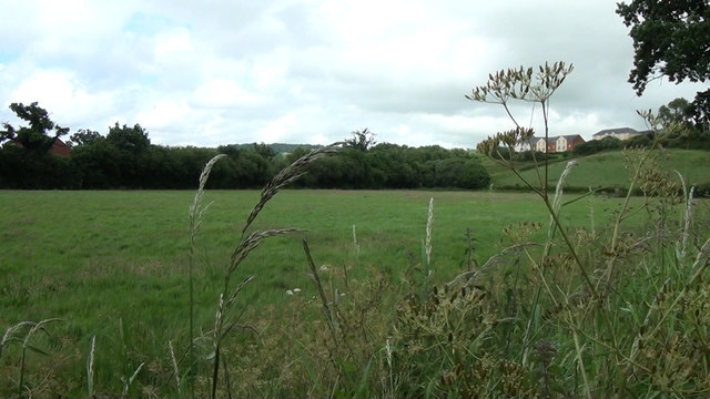 Tiverton : Grassy Field