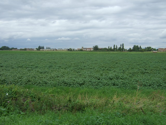 Crop field towards Manea