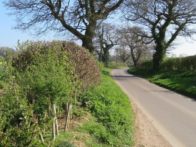 View along Ivy Down Lane