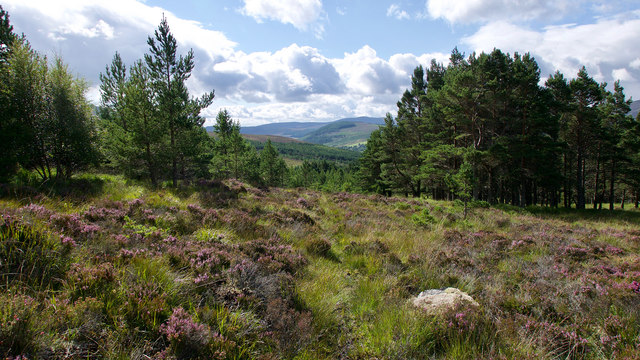 Woodland above Strath Rusdale