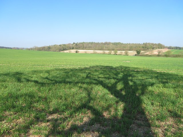 Distant view of Summer Down Copse