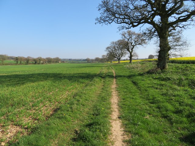 Bridleway towards Ivy Down Lane