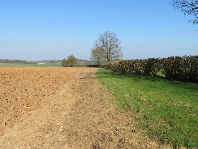 Field boundary south of White Lane