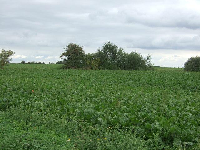 Crop field, Honey Hill