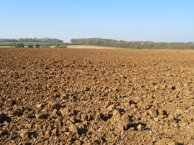 Field south of White Lane