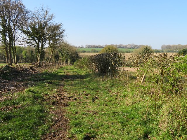 The hedge has gone