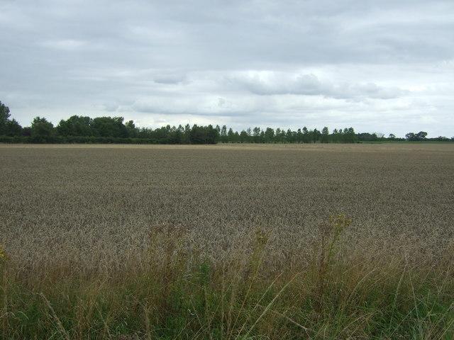 Cereal crop, Horseway