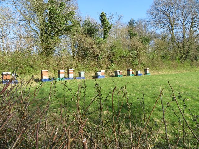 Beehives by Lockley Copse