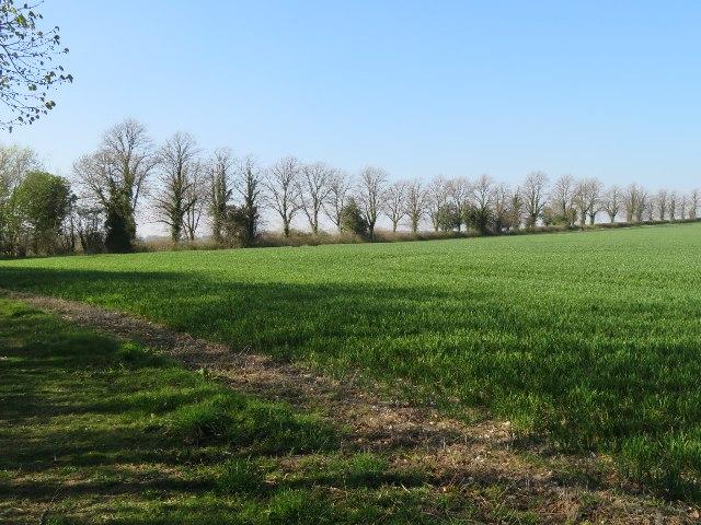 Trees mark Ibworth Road