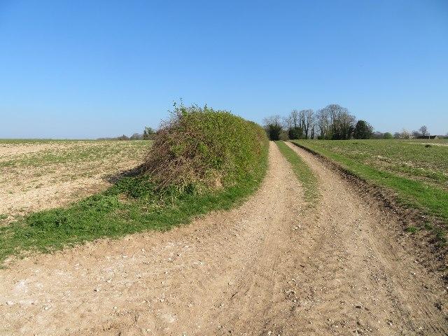 Track towards Shear Down Farm