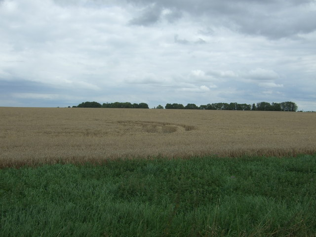 Cereal crop off Stocking Drove