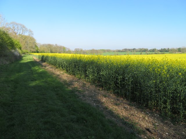Rifle Butts Field (117.5 acres)