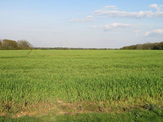 View across Danny Field (26 acres)