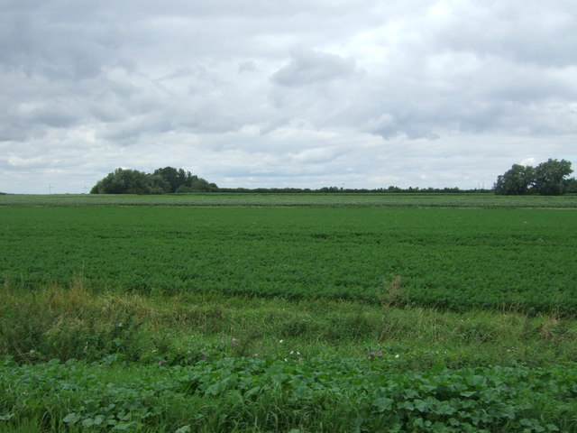 Crop field off Long North Fen Drove