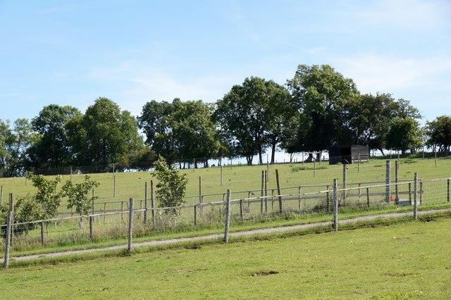 Bocketts Farm, Fetcham