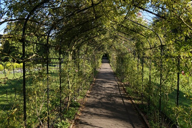 The rose corridor in the garden at Nonsuch Park