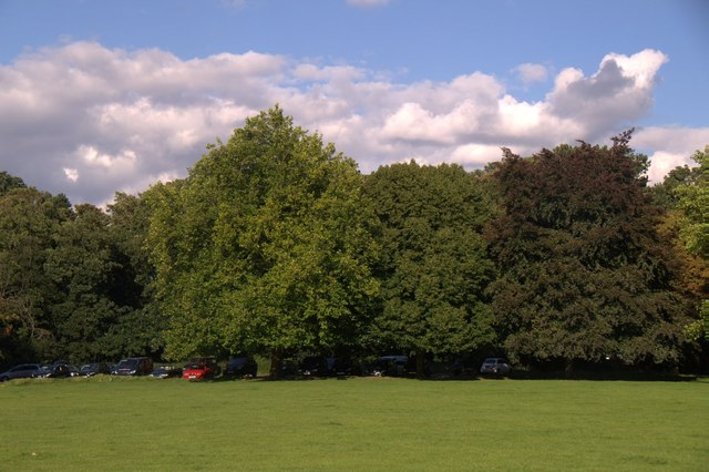 Trees in Nonsuch Park