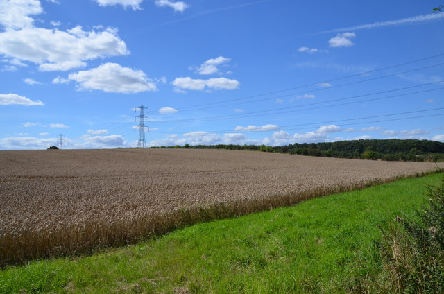 Crop field near Carlton on Trent
