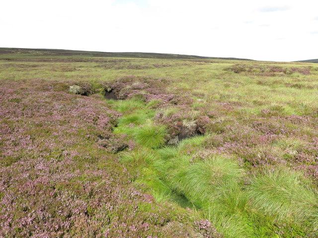 Puddingthorn Moor below Stangend Rigg