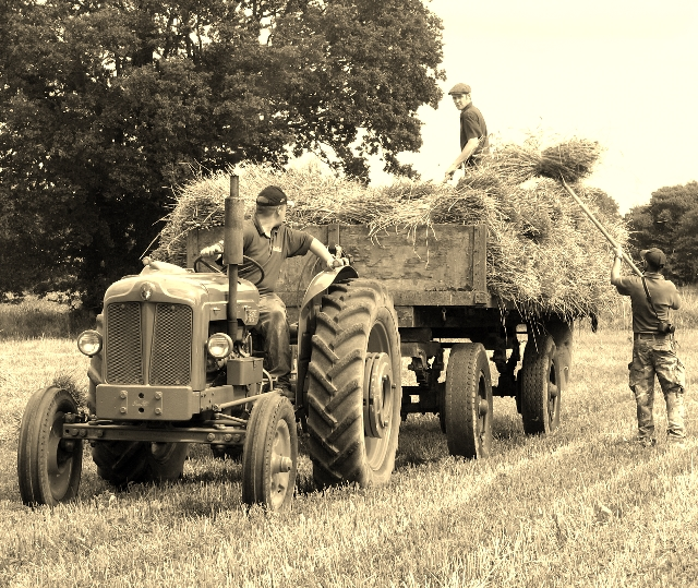 Harvesting as it was done in the 1950s