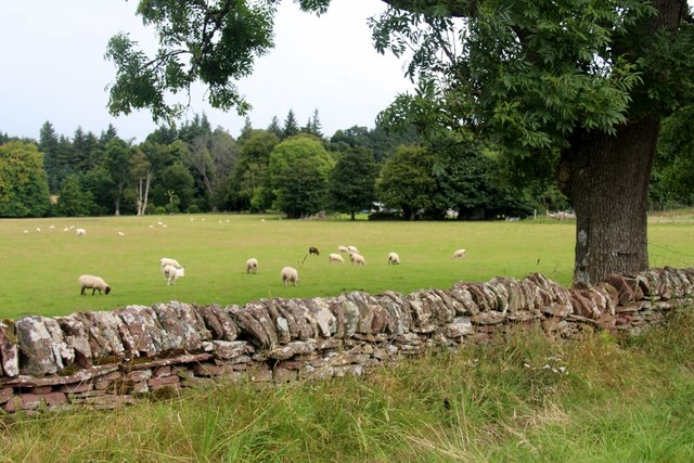 Sheep grazing at Lyleston