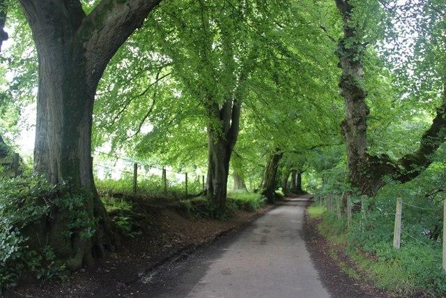 Tree-lined shady lane near Darvel