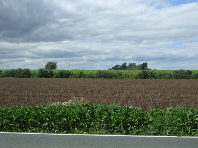 Crop field, Hundred Foot Bank