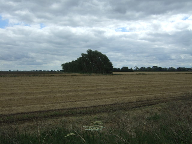 Recently harvested field and strip woodland