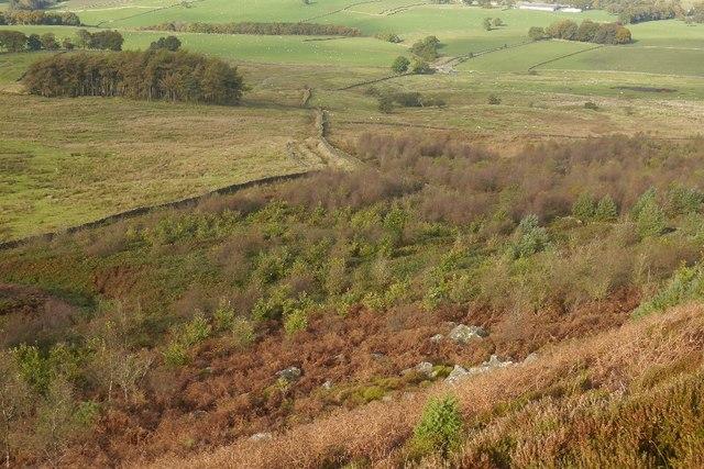Woodland, Sun Moor Hill