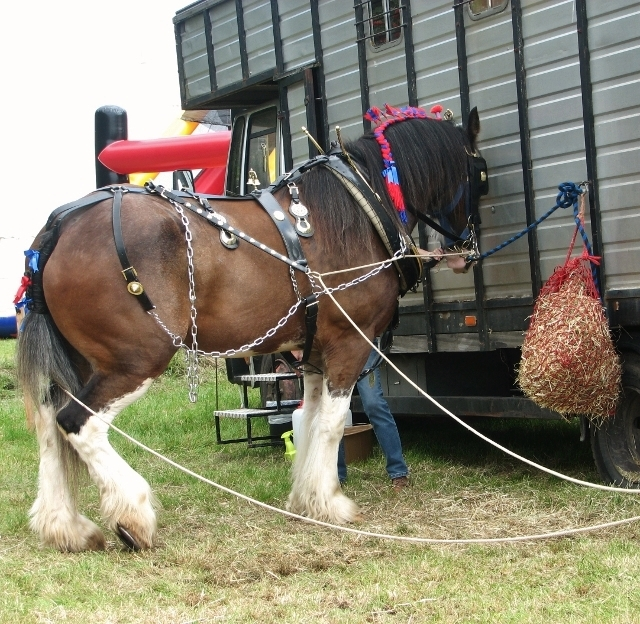"""Charlie"" the plough horse"