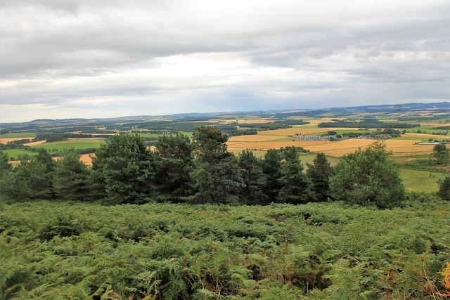 Fern and Trees on Barmekin Hill