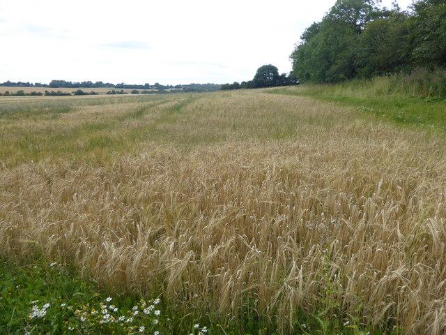 View from Caythorpe Heath Lane