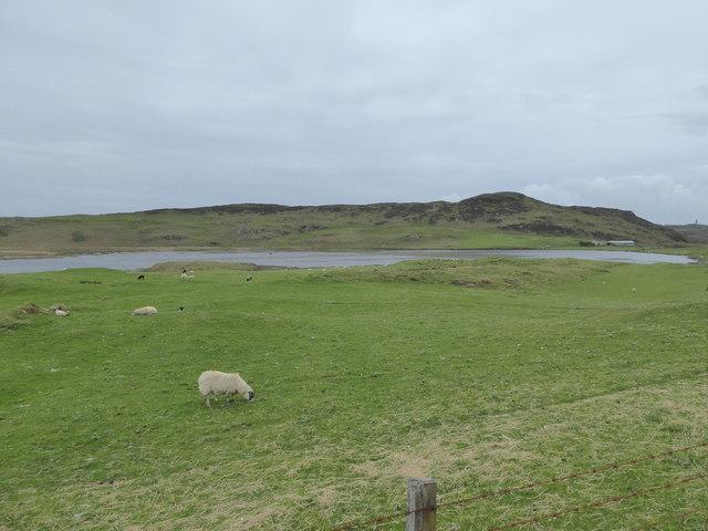 Sheep by Loch Grigadale