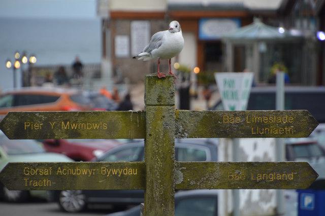 The Mumbles : Signpost
