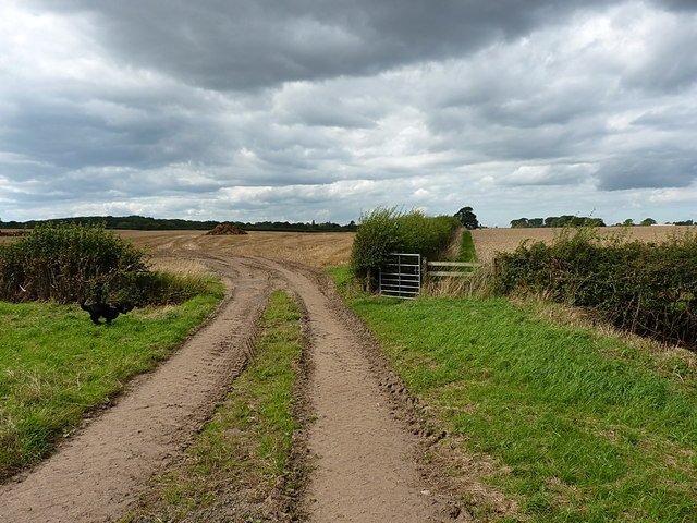 Hedges, a gate and a bridge over a field drain