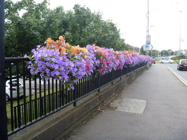 Carrickfergus flowers [2]
