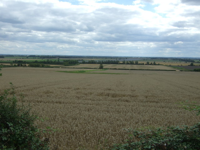 Cereal crop south of Haddenham Road (A1123)