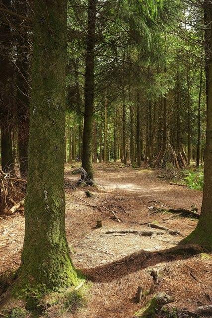 Gruffalo Spotters Trail, Haldon Forest